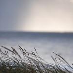 Dünen-Mikado mit Tendenz nach Osten