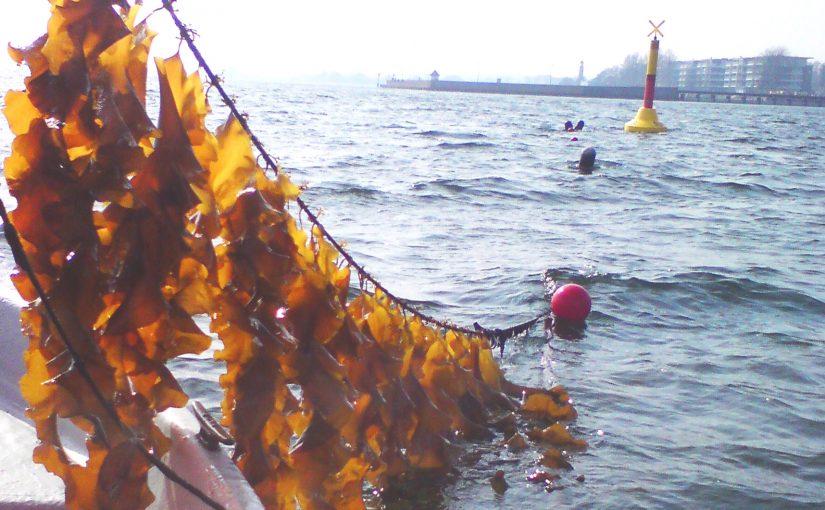 Was bedeutet Nachhaltigkeit in der Aquakultur?