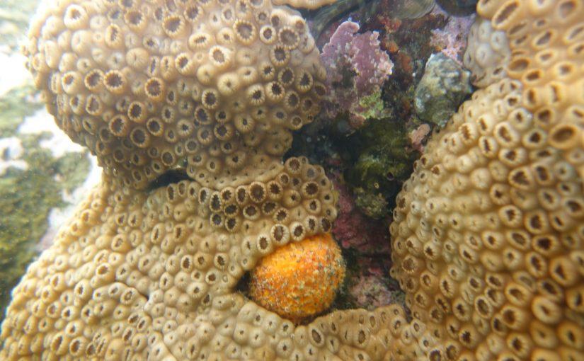 Unbekannte Unterwasserwelt