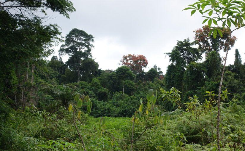 Der Ausflug in den Küstenwald