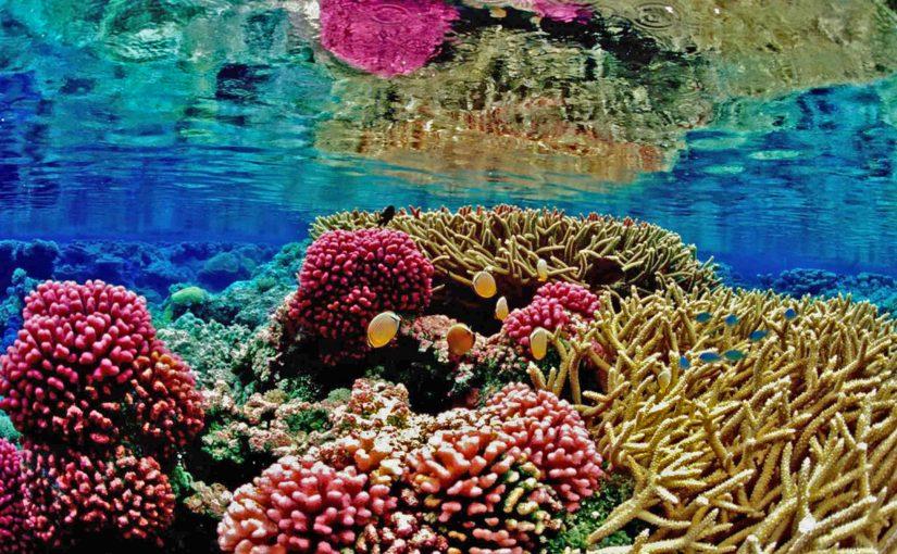 Korallenbleiche – Wie mit den Korallen ganze Ökosysteme sterben.
