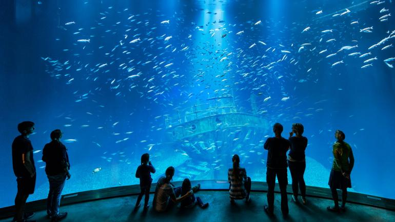 Marine Bioökonomie – das Meer als Ressource