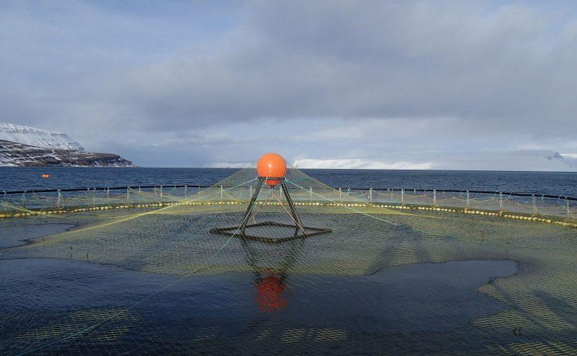 Netzkäfig für Lachse in einem isländischen Fjord.