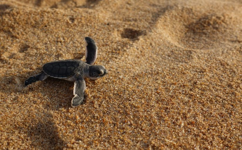Protect the Ocean – aus Liebe zum Meer