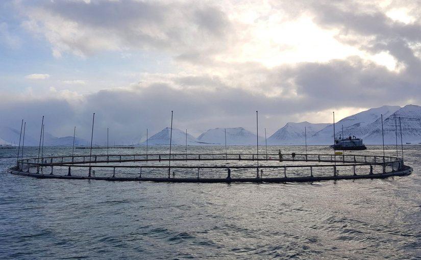 Reisegrüße aus Island