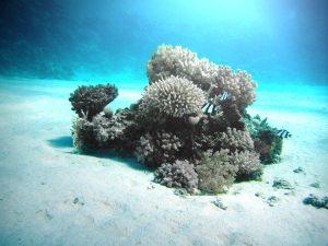 ausgeblichene Korallen am Meeresboden