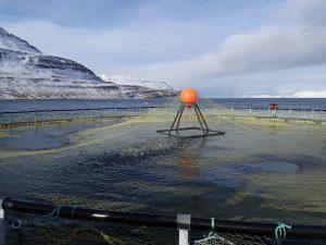 Fischzucht in Island