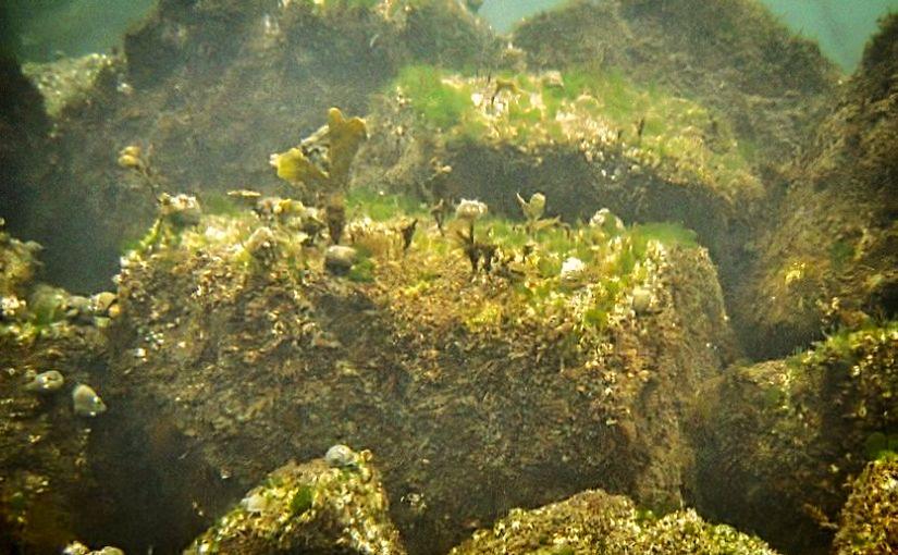 Braucht die Kieler Förde künstliche Unterwasser-Riffe?