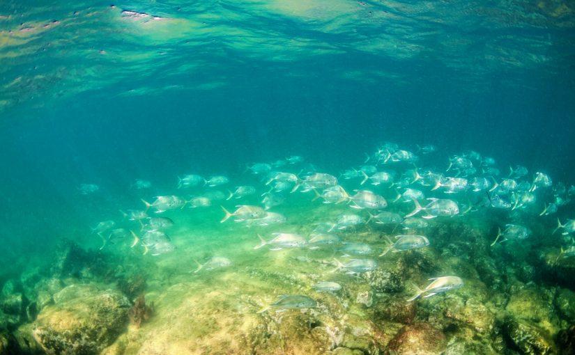Neues Meeresschutzgebiet