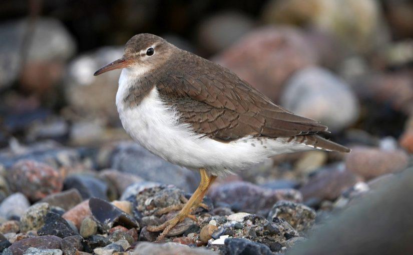 Birdwatching oder: Wie finde ich Gleichgesinnte in der Natur?