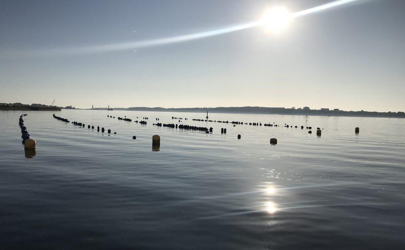Die Kieler Meeresfarm – nachhaltige Aquakultur vor unserer Haustür